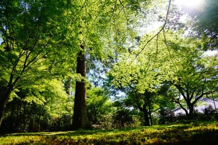7月6日「哲学の道でイタリアンランチと比叡列車&大原あじさい祭り♪」結果報告☆