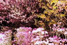 3/15(日)伊勢名物ランチとおかげ横丁散策&梅まつりライトアップ♪♪結果報告☆
