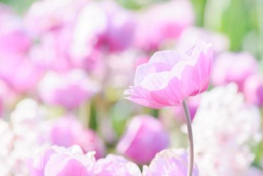 宮原の日常の一コマを・・・つぶやいてます(*^▽^*)虹プロジェクト~ありがとう♪~